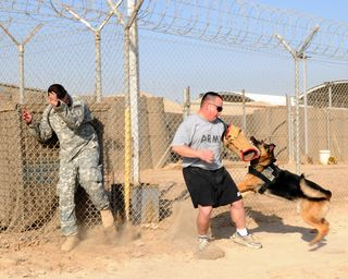 Sgt. Ricky, a military working dog, attacks Staff Sgt. Kenneth Hennig, a native of Houston and a specialized search dog handler for the 40th Military Police Detachment out of Fort Sill, Okla., during bite work training in Basra Sept. 13. The canine and his handler, Spc. David Steele, a native of Upper Marlboro, Md., and with the 34th Military Police Detachment from Fort Knox, Ky., have been deployed as a team since Nov. 2009. Hennig and Steele are attached to the 1st Infantry Division, United States Division-South. (U.S. Army photo by Spc. Raymond Quintanilla, USD-S Public Affairs)