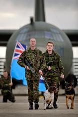 RAF dogs