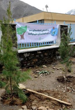 Panjshir Trees