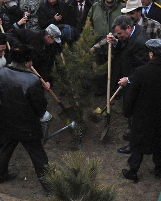 Kabul Tree Planting