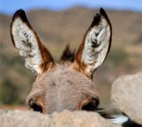 Donkey-closeup_200